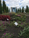 Mysig trädgård/Nice garden